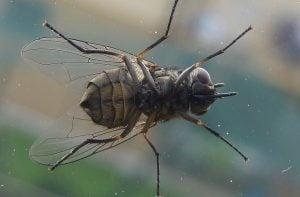 Come-allontanare-le-mosche