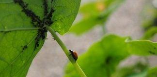 Parassiti-delle-piante
