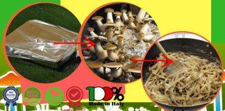 come coltivare funghi in casa - Spora