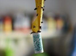 Trappola-per-mosche