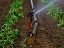 Centraline-per-irrigazione